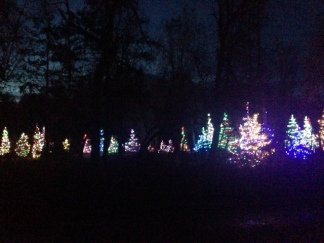 lighted trees color